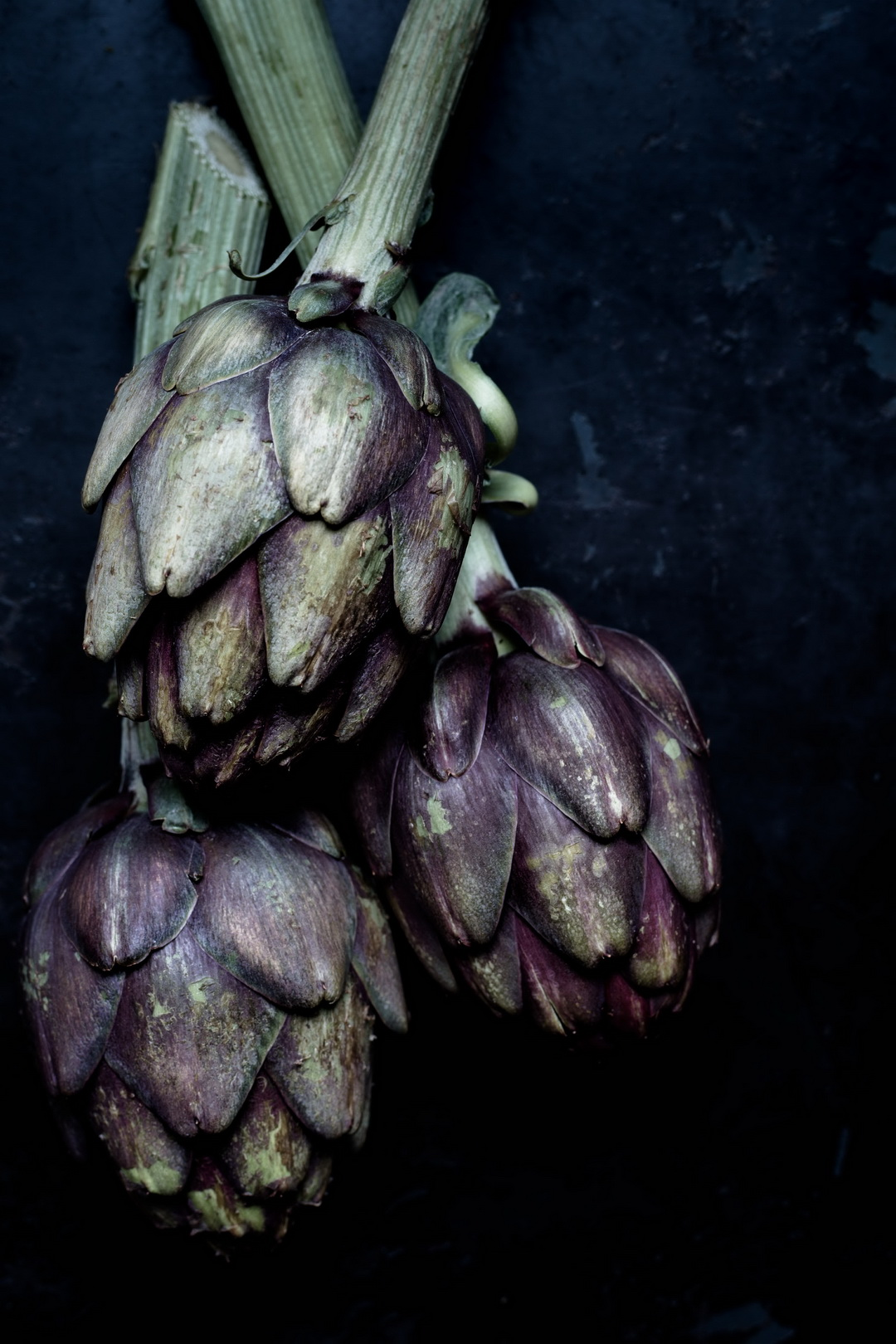 The Urban Nest. Moody artichokes.